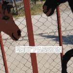 epquipassion